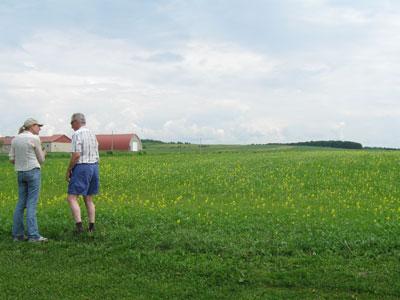s-arven-field